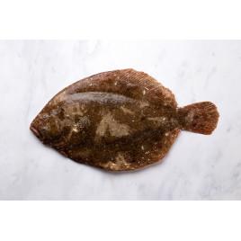 Barbue - 4 filets